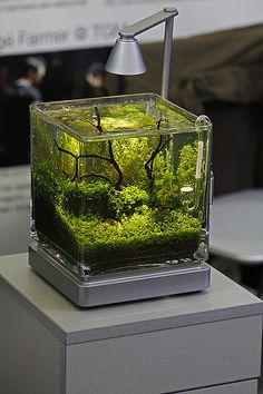 DIY Biosphere It's Completely Self Sustained And Can Live Off