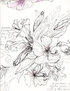 Peony drawing, Peonies and Drawings on Pinterest