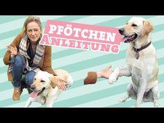 Hund Rückwärts Einparken Laufen Teil 1 Tricks Beibringen
