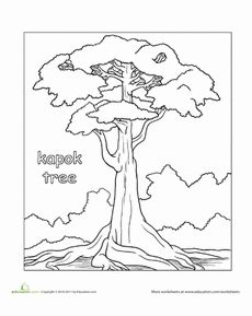 1000+ images about The Kapok Tree and rainforest on