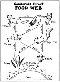 1000+ images about Food webs. Energy webs on Pinterest