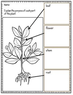 1000+ images about Science: Plants on Pinterest