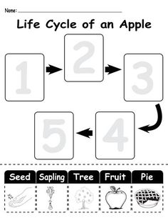 Carrot seeds, Carrots and Matching games on Pinterest