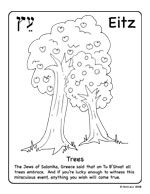 Tell Me, Tree: All About Trees for Kids by Gail Gibbons. A