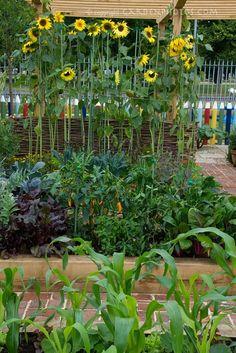 Fruit Veggies And Sunflower Garden Front Yard Garden Ideas