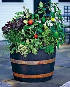 15 Fun Ideas For Growing Tomatoes Gardens Vegetables And