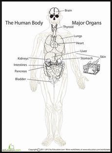 Human Body Systems Multiple Choice Worksheets (5