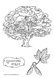 Sycamore trees, How to draw and To draw on Pinterest