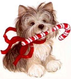 1000 Images About Yorkie Colorable On Pinterest Yorkie