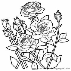 Roses to Print and Color