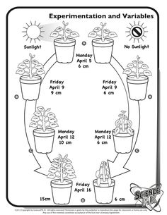 Rock Cycle. SciencePIX Printables. Resoruces for teach
