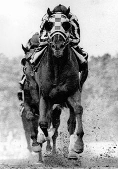 1000 Ideas About Race Horses On Pinterest Thoroughbred