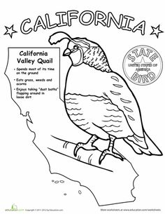 A coloring sheet for each state, could be a fun way to
