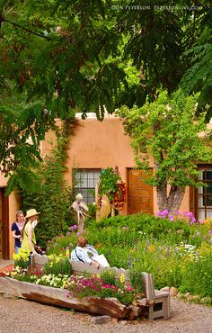 New Mexico Gardening Songbird Garden1 Outside Ideas