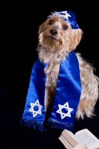Weimaraner and Weiner Dog Dachshund in Hanukah/Mitvah ...