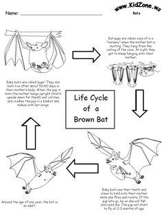 1000+ images about Stellaluna/bats on Pinterest