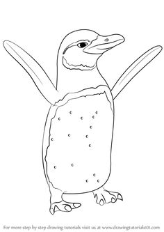 Learn How to Draw a Little Blue Penguin (Antarctic Animals