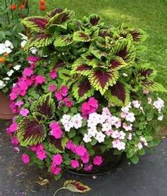 Colorful Shade Container Garden Favorite Places & Spaces Garden
