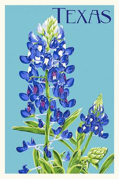 1000 ideas about Texas Bluebonnets on Pinterest Texas