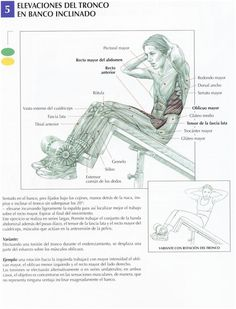 pull up muscles worked diagram 1990 honda trx 300 wiring upper body so you know which to target   workout pinterest ...