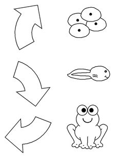 This FREE frog life cycle cut-and-paste worksheet is a fun