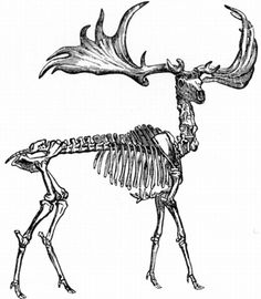 Squirrel, Skeletons and Bone jewelry on Pinterest