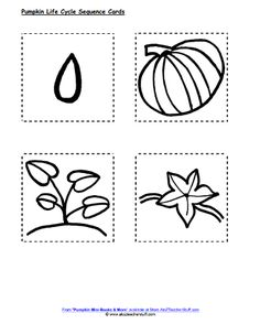 Activities, Pumpkins and Life cycles on Pinterest