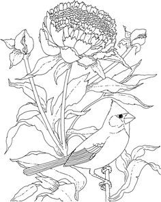 Free Printable Coloring Page...Ohio State Bird and Flower