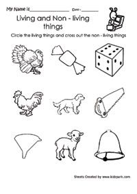 NEW 163 FIRST GRADE SCIENCE WORKSHEETS LIVING THINGS