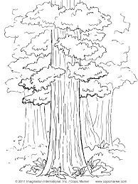 landscape-drawing-basic-36-shrub-elevation-06-640x360.jpg