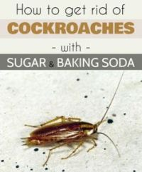 How to Get Rid of Roaches in Your House (Without an ...
