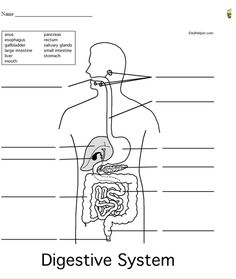 Human body, Free printables and Printables on Pinterest