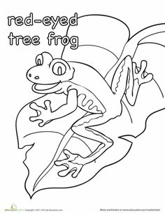 1000+ images about Red Eyed tree frog for my ZZ on
