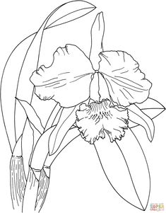 1000+ images about Flowers drawings of orchids on