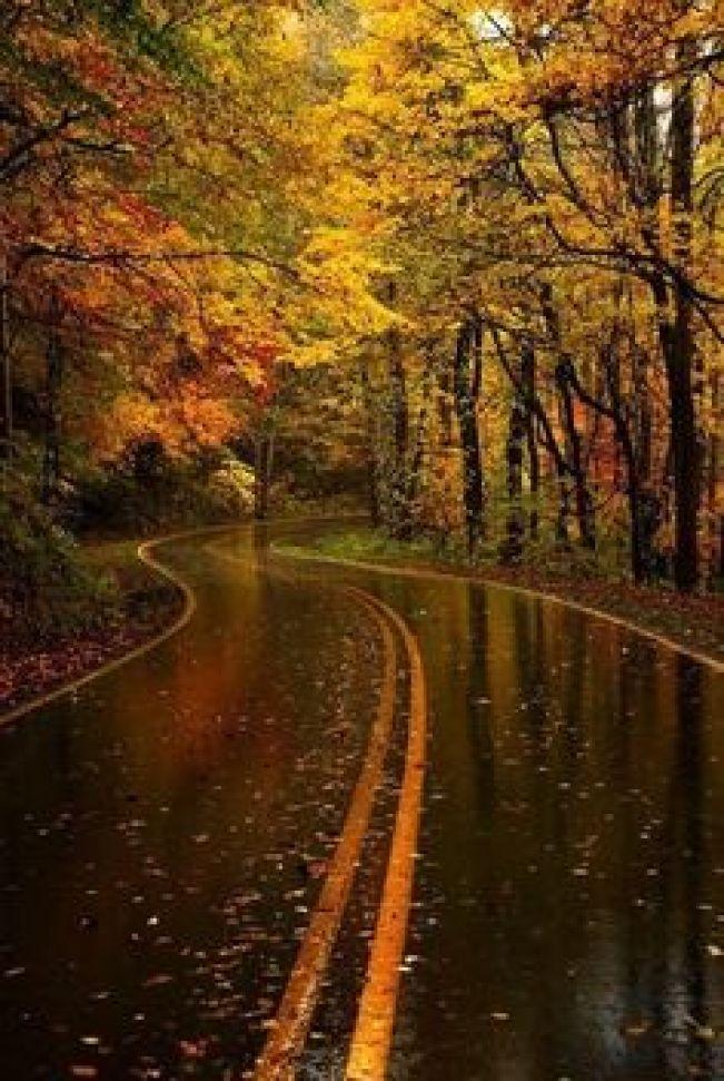 drive in autumn