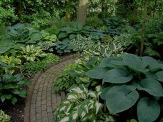 Foliage Plant Combinations Ferns Could And Plants