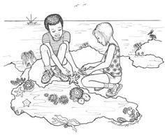 Enchanted Learnings got great information on Ocean Zones