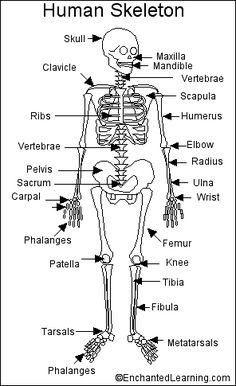 Sea Star Anatomy Diagram Worksheet, Sea, Free Engine Image
