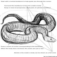 how to draw a king cobra snake step 7 remember to view all
