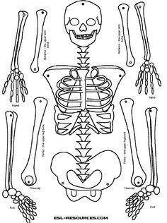 1000+ images about health/skeletal system etc on Pinterest