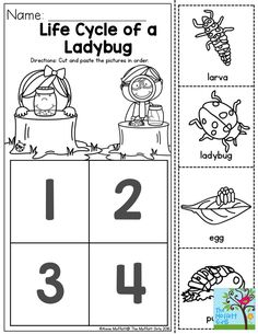 FREE Ladybugs Worksheets for kids learning about ladybug