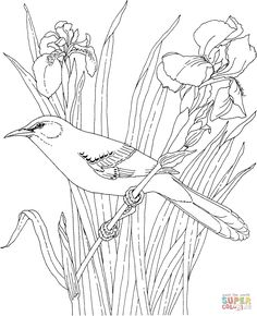 Free Printable Coloring Page...Washington State Bird and