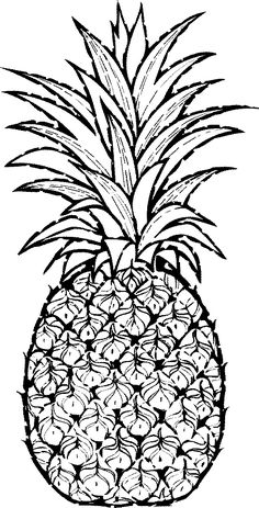 Pineapple Drawing Related Keywords & Suggestions