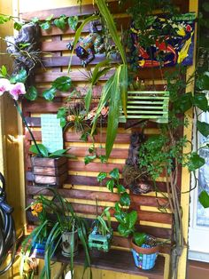 Orchid Garden On Balcony Backyard Orchid Growing Pinterest