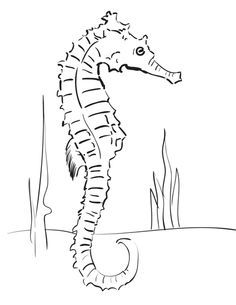 Step howtodrawseahorses stepbystep squares How to Draw