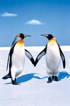 Cute Couple Holding Hand Wallpaper Penguins On Pinterest Baby Penguins Penguins And