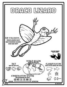 1000+ images about Zoo Teaching Unit on Pinterest