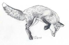 I really want a fox tattoo on my ribs one day. And it
