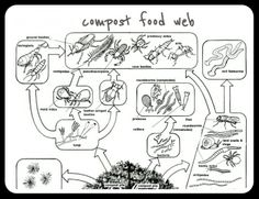 Food Web Label; simple, good for our kindergarteners