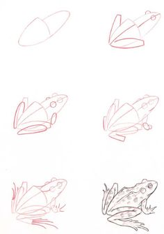learn how to draw a frog with simple step by step